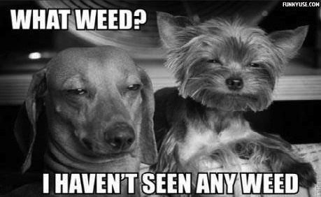 What weed? I haven't seen any weed  Funny Pictures