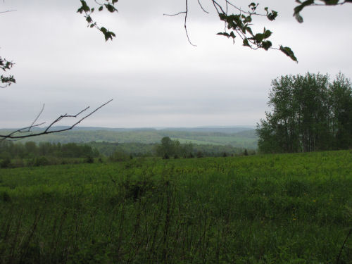 Cuyler Hill view