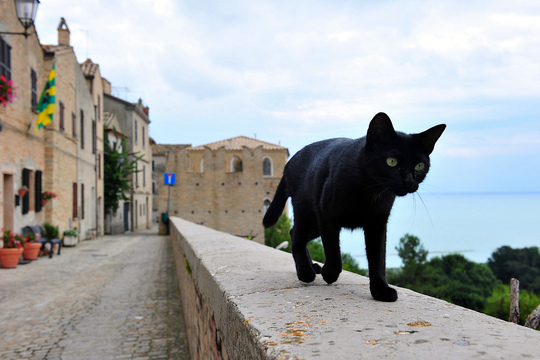 Cat from Torre di Palme Italy