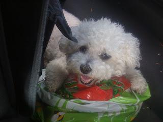 Sallydog