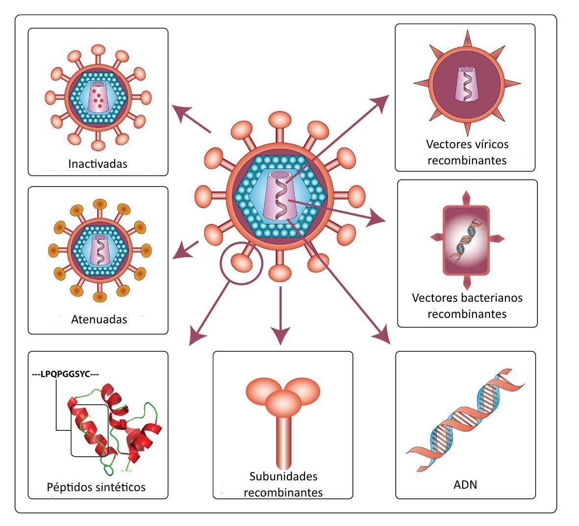 B.log.ia 2.0: Sistema Inmunitario III: aspectos médicos