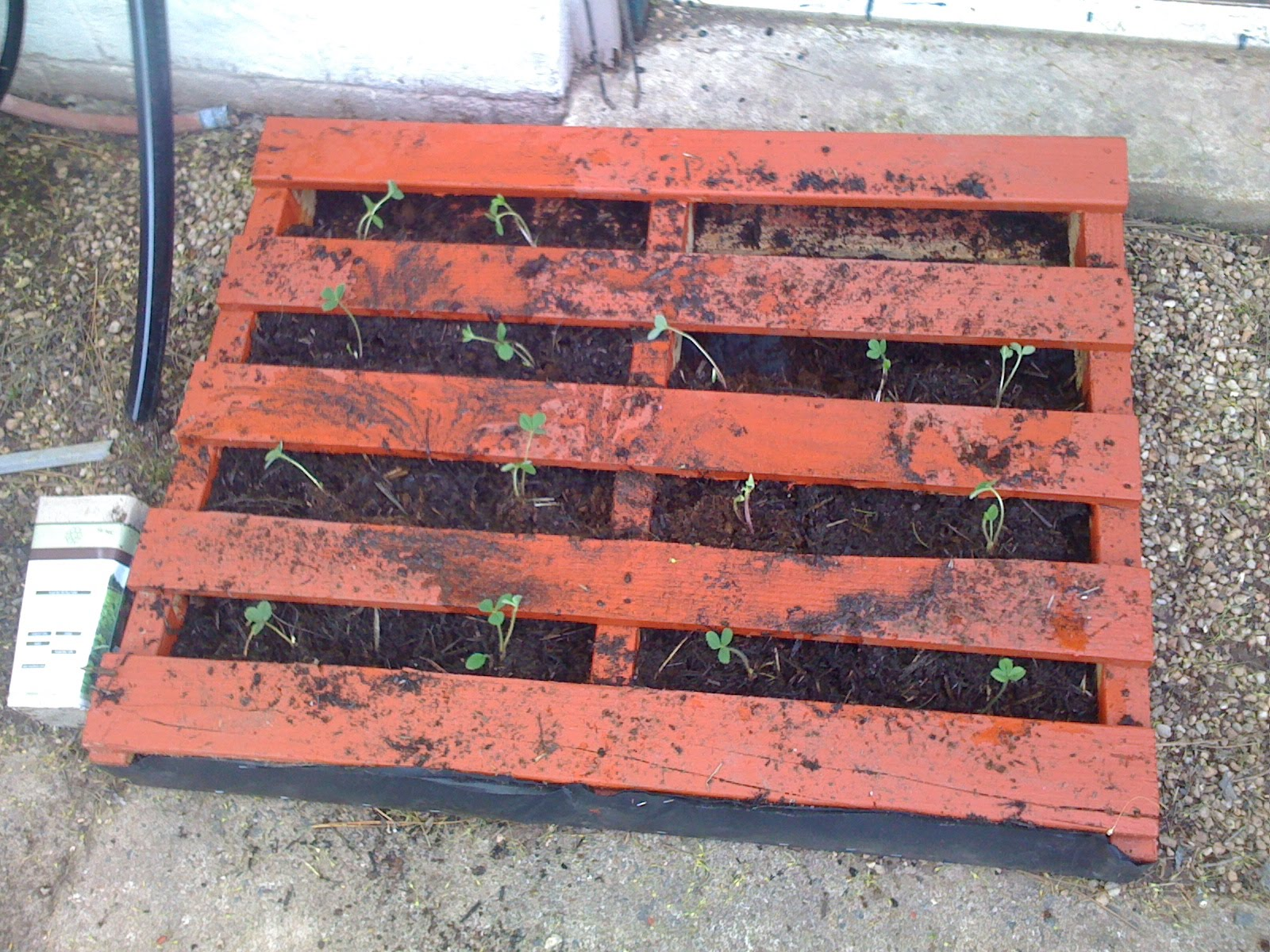 Square Foot Gardening In Northern Virigina Strawberry Pallet