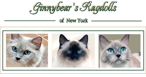 Ginnybear's Ragdolls of New York