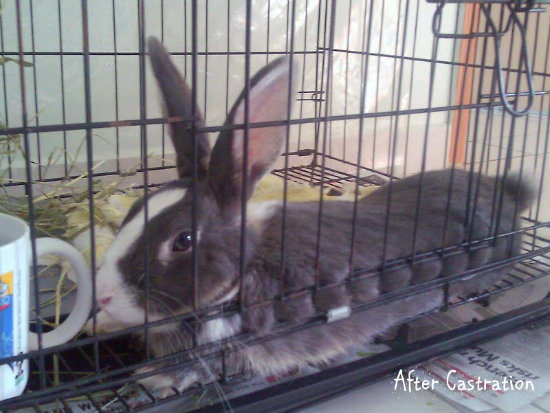 fluffy and bunny bunny i can handle castration. Black Bedroom Furniture Sets. Home Design Ideas