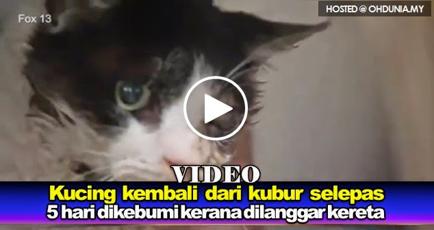 Kucing kembali dari kubur selepas 5 hari dikebumi mati dilanggar kereta