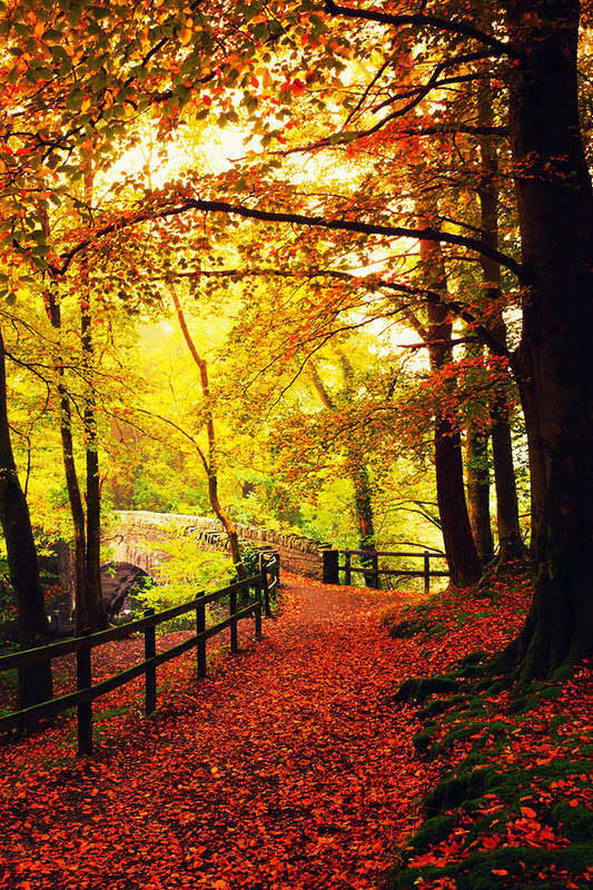 fall iphone 4 wallpaper images pictures becuo