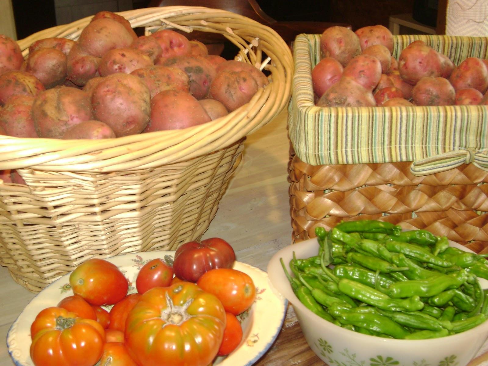 Tsg Storing And Freezing Harvested Potatoes