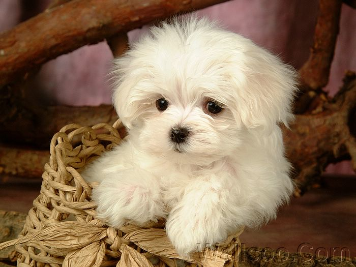 Funny Animals: Cute White Puppies