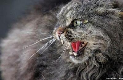 Ciri ciri kucing menderita rabies