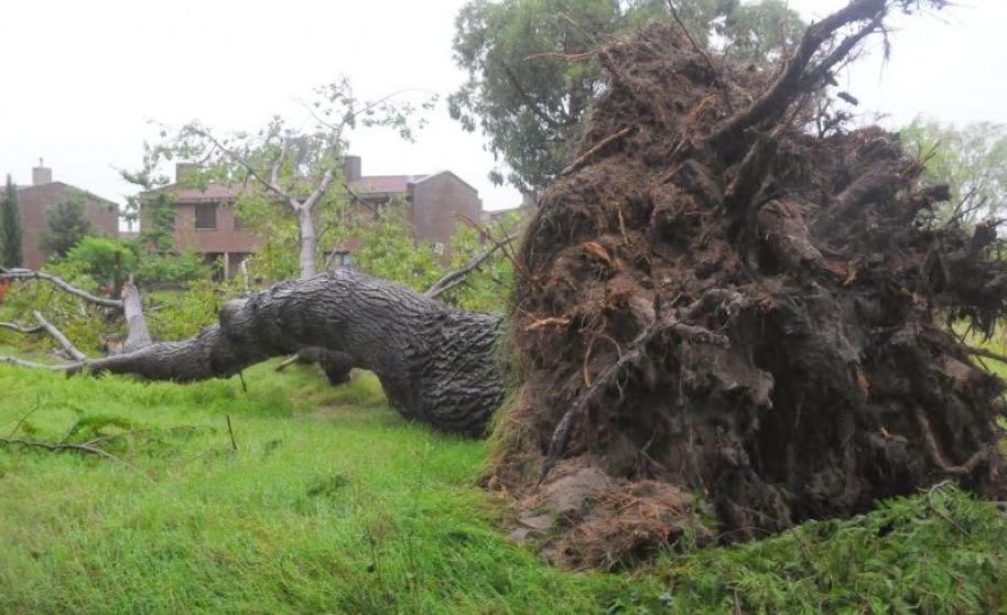 tormenta arrasa con árboles de raíz en Uruguay, 25 de Enero 2014