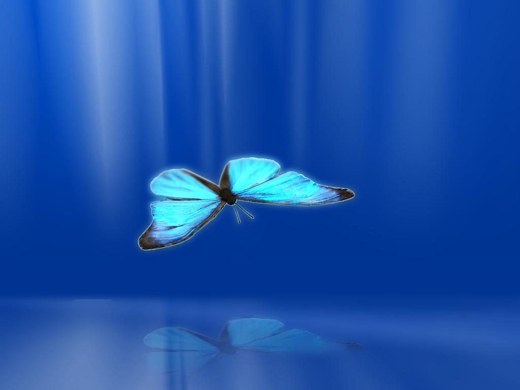 Goliath Butterfly butterflies