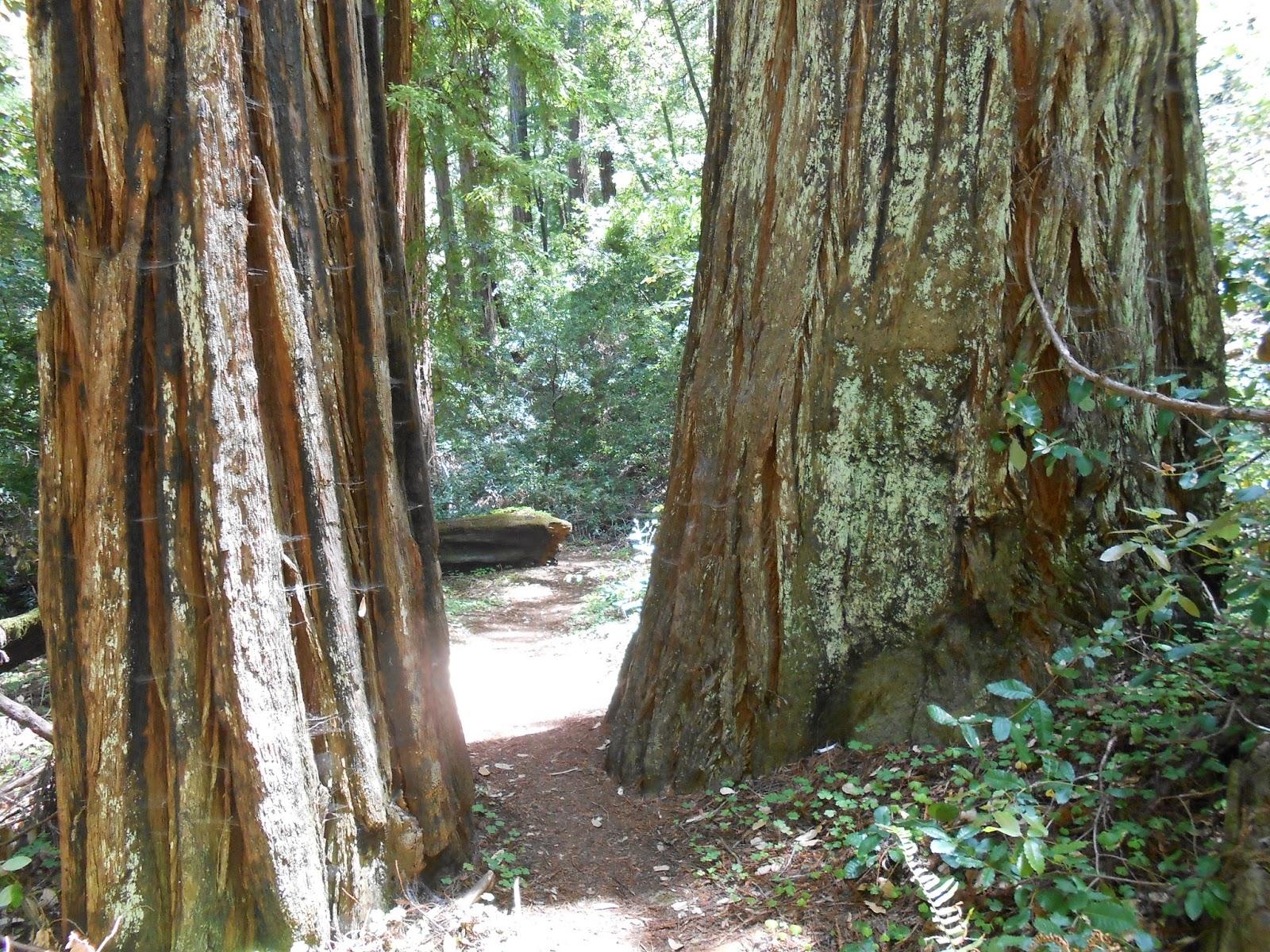 spirituality, nature, redwoods,