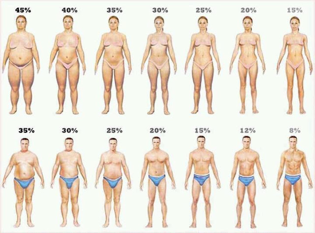 Can Body mass fat percentage phrase