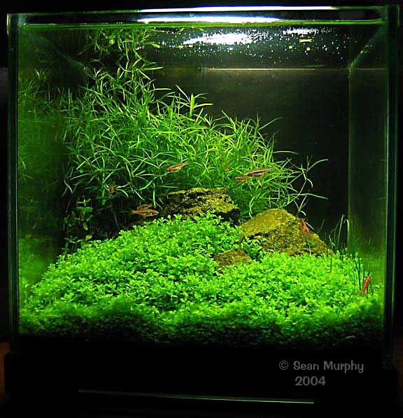 Basic aquascaping principles and technique aquascape for Best fish for nano tank