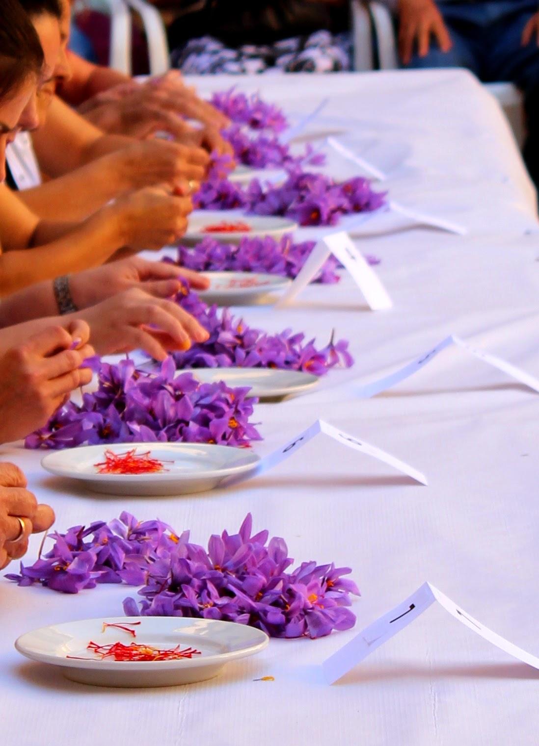 Monda del Azafrán. Fiesta del Azafrán en Consuegra