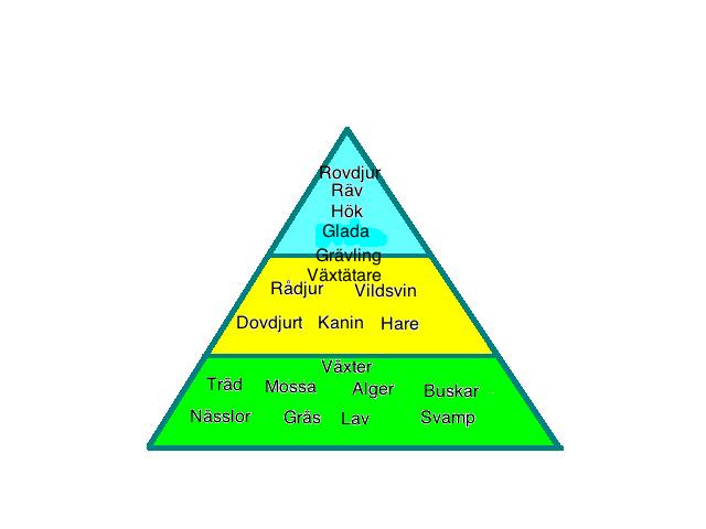 näringspyramid