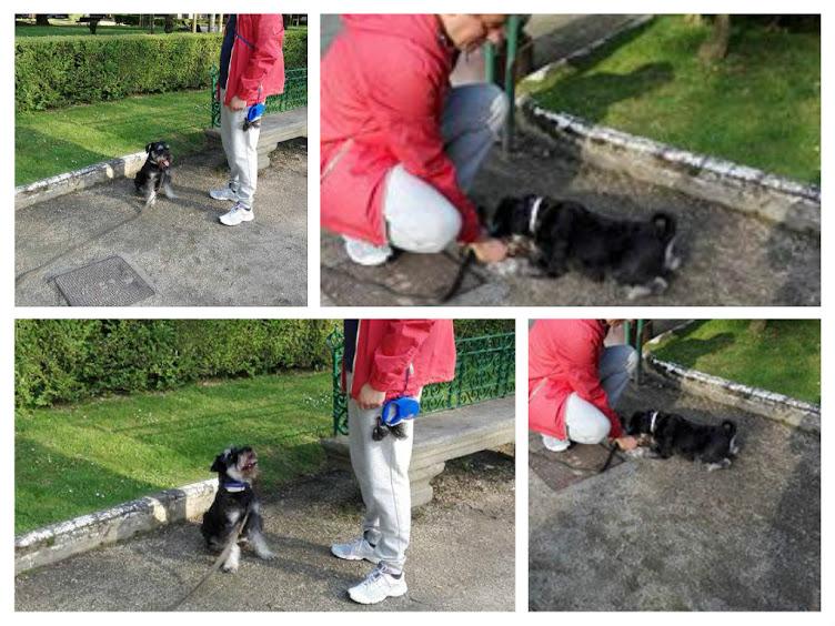 Julio y Ghoss 14 meses, muy ansioso y poco obebiente, básico!!