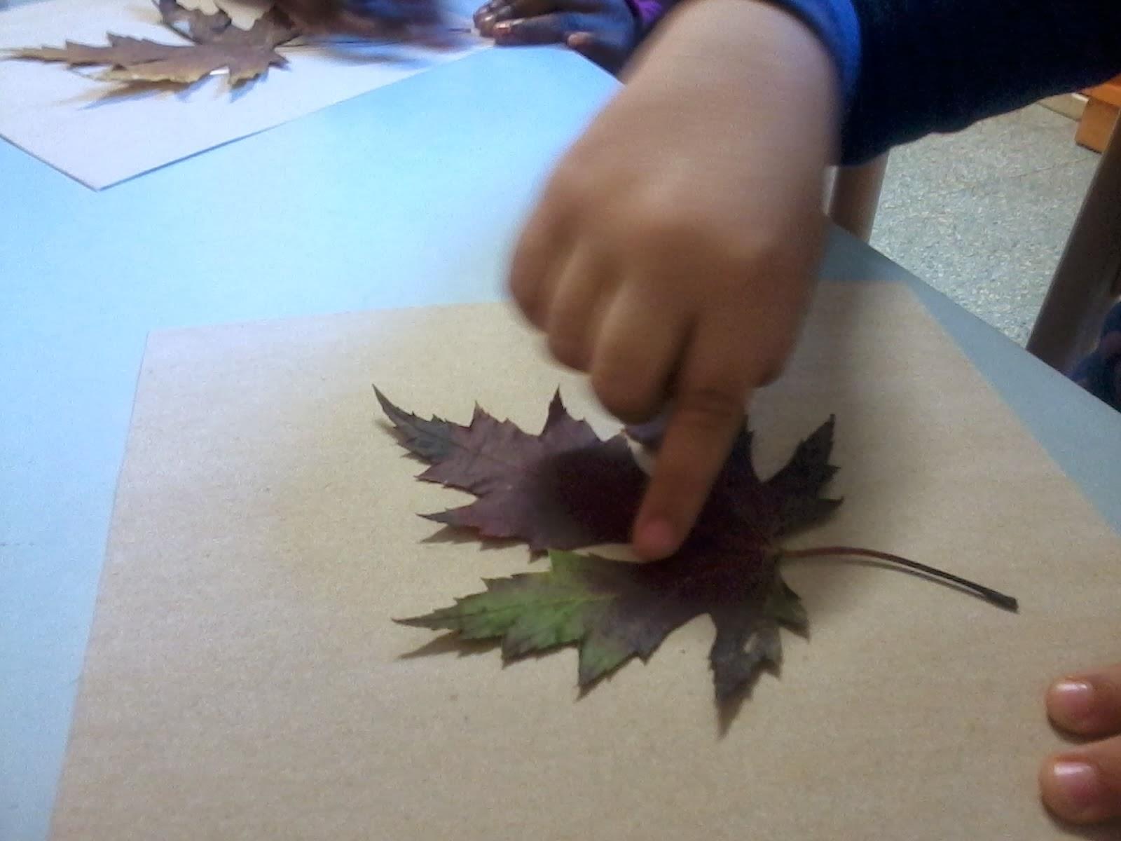 Maestra laura la foglia e il suo contorno - Foglia canadese contorno foglia canadese ...