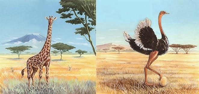 Girafe et Autruche