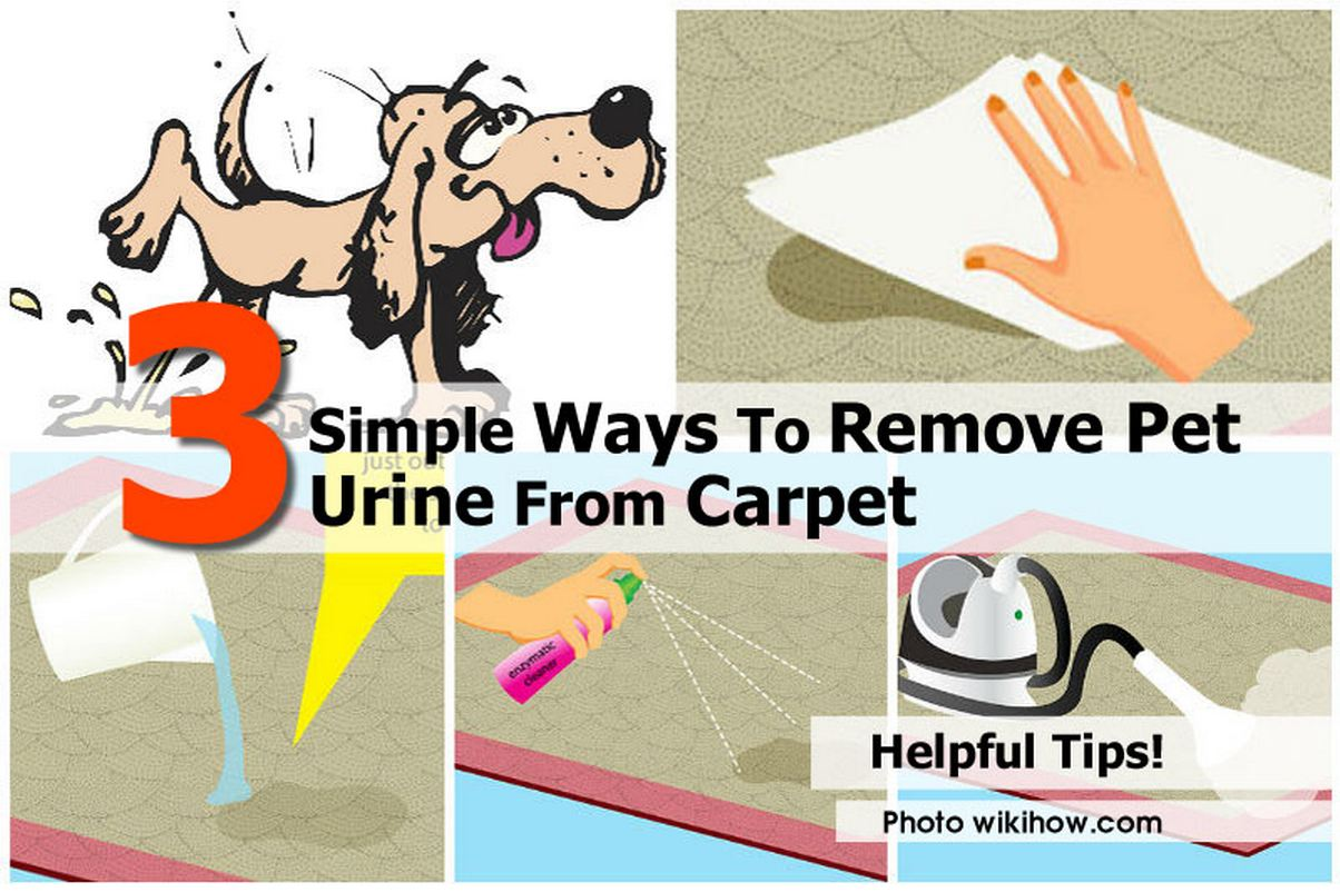 3 simple ways to remove pet urine from carpet idees and solutions. Black Bedroom Furniture Sets. Home Design Ideas