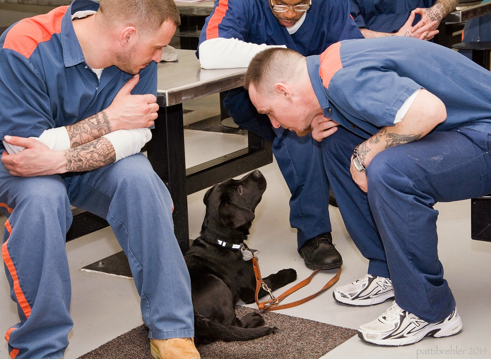 A black lab puppy is lying half on a brown carpet square and half on a painted cement floor. He is facing away from the camer and lookng up at a man who is sitting on the right side of the photo. The man is bending over and looking at the puppy, his left forearm is resting on his left thigh. Two other men are sitting at a lunch table on the left and behind the puppy. All three are wearing the prison blue uniforms and looking at the puppy. The man on the left has his arms folded acrss his legs. The man behind has his right foot on the puppy's leash.