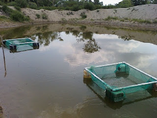 Noticias en linea de tabasco benefician a familias con for Jaulas flotantes para piscicultura