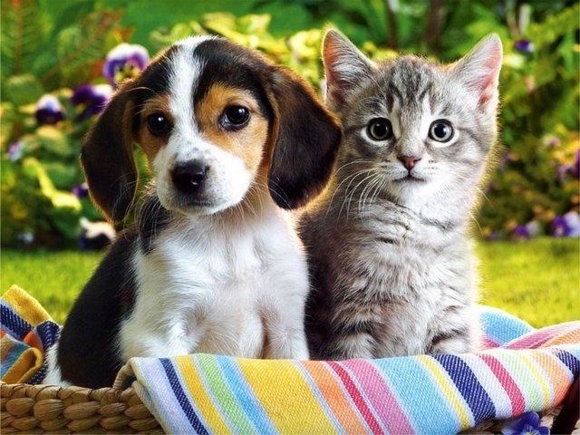 Собаку в отличие от кошек