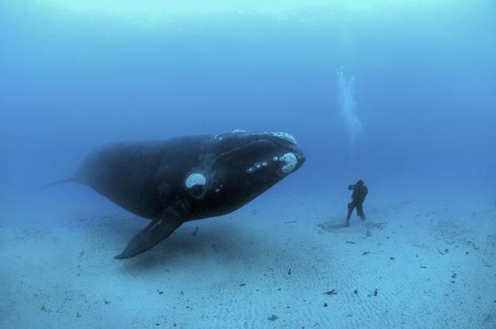 Whale Faeces