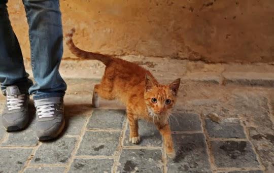 Cat of Fez