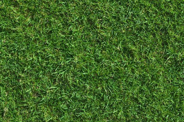 Green lush grass texture