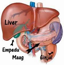 Cara Cepat Menyembuhkan Penyakit Liver