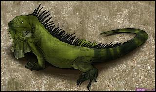 green iguana hijau mona chuckwalla merah peru laut rhinolopha animal pets