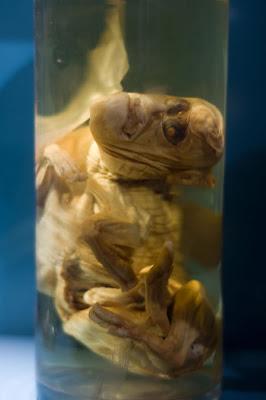 Los Animales de Chernobyl Sobreviven ante las mutaciones!