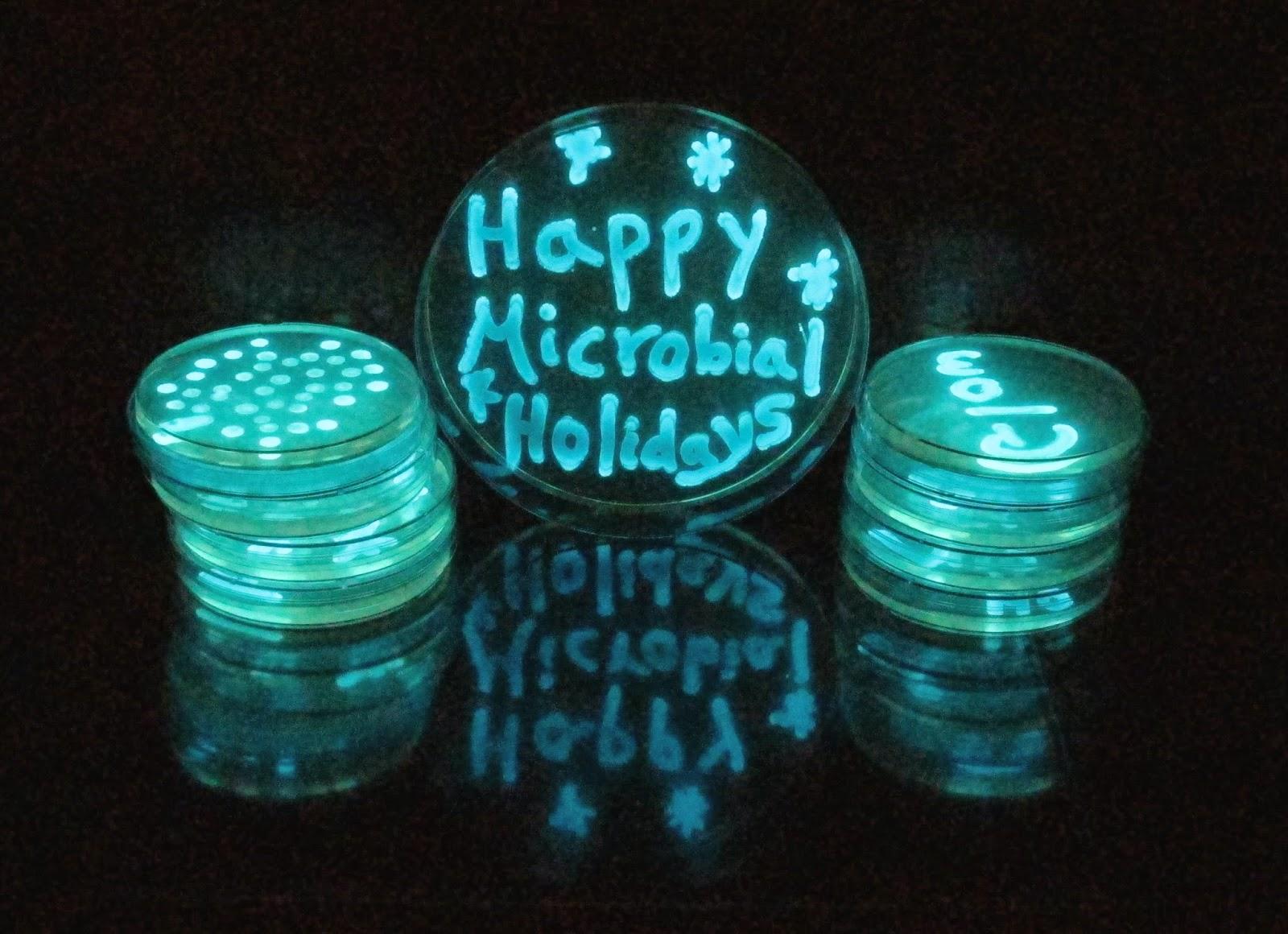 Microbiology fun