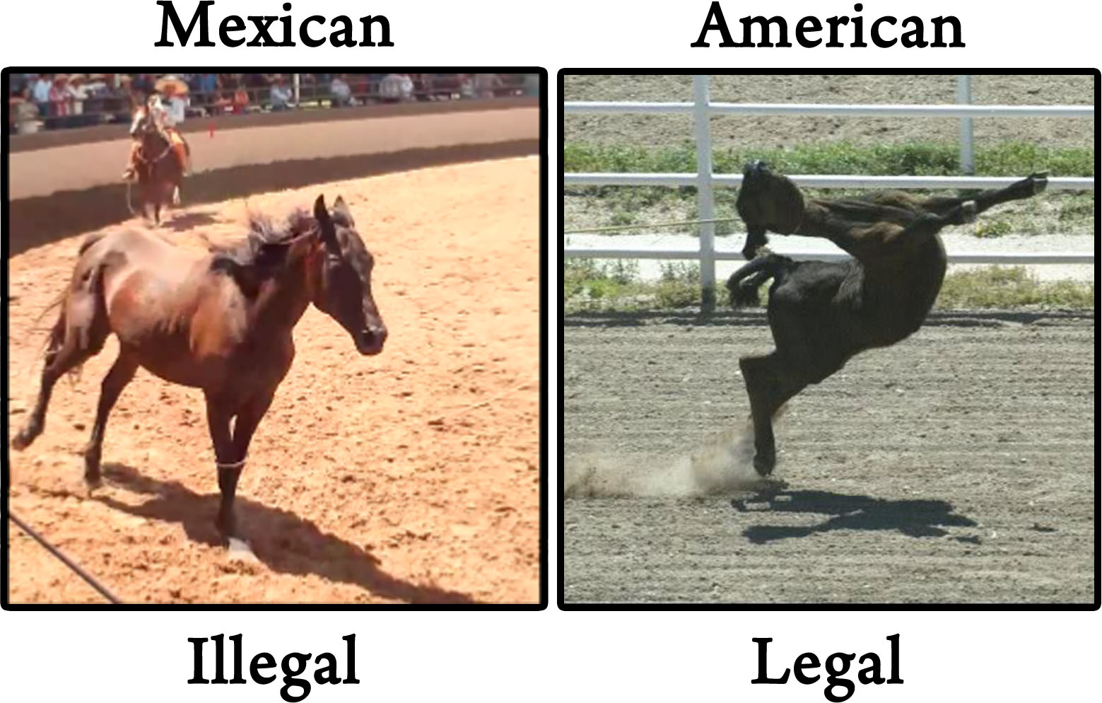 Animal Cruelty Quotes The Truth About Horse Tripping In The U.s. Animal Activist Quotes