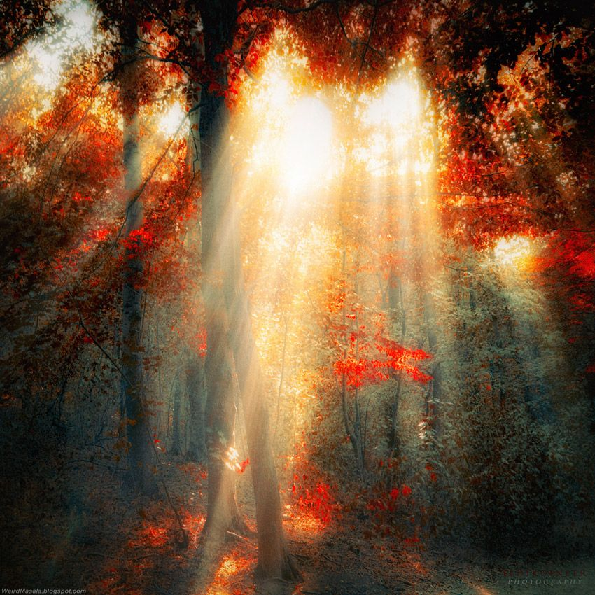 Fabulously Mysterious Photography by Ildiko Neer