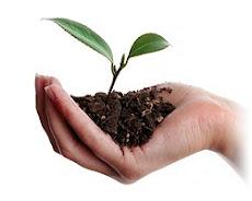 Adote essa idéia...Plante!!!