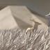 Increíble animación para WWF