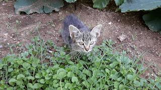χαριζεται γατακι Θεσσαλονικη