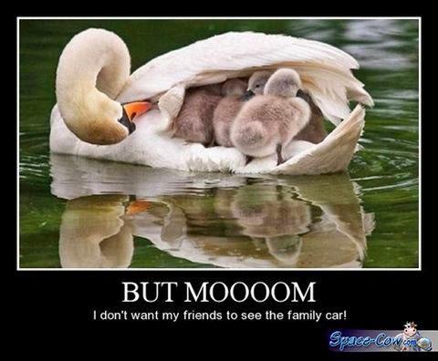 funny bird pics humor