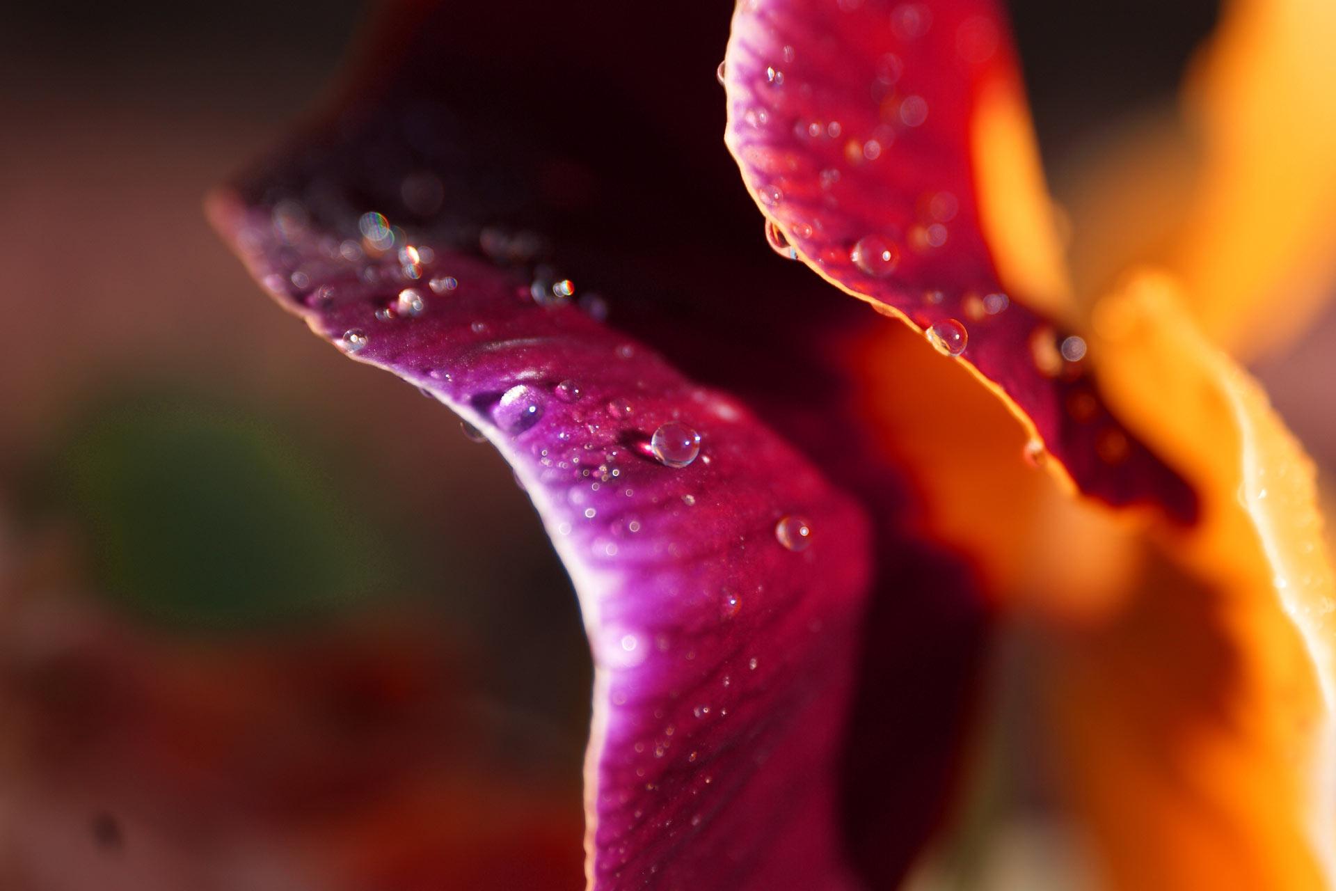 http://2.bp.blogspot.com/-bUc0yHf0ZV0/T32T8JD-TOI/AAAAAAAAIaM/TWfHTapDBig/s1920/Delicate_Petals_by_lefthandgergo.jpg