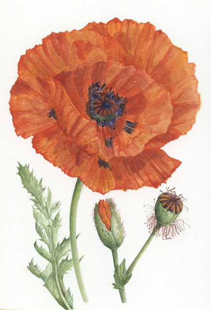 Mahn 84 org presents flowers watercolors plates