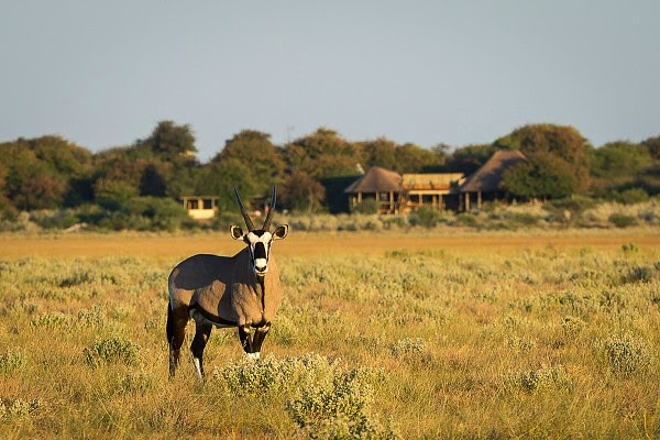 Kalahari Plains Camp Botswana