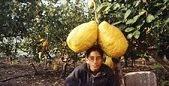 Maiores Limões