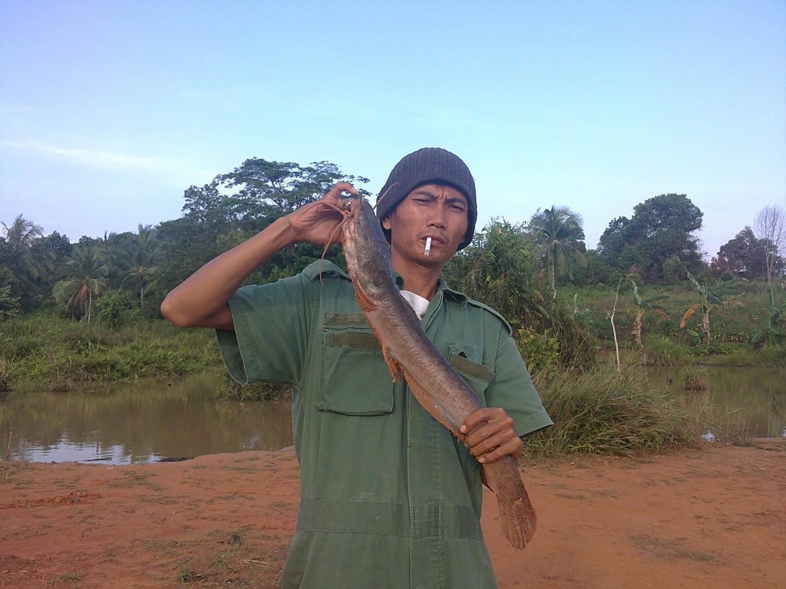 Umpan Ikan Nila Babon - maoxiandao