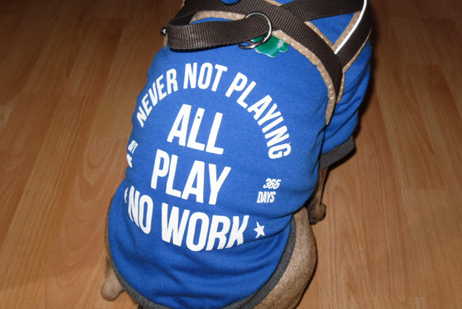 All Play No Work French Bulldog Sweater