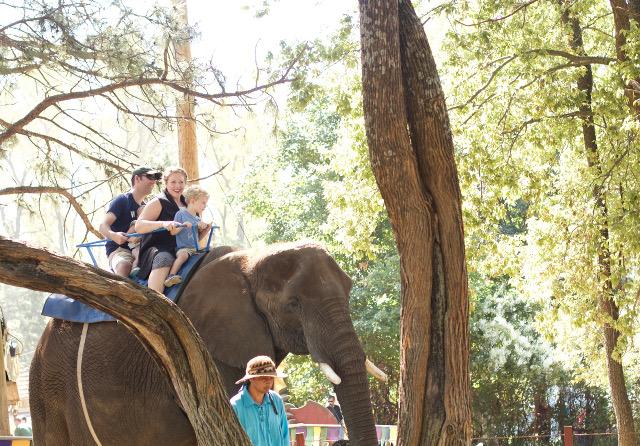 Riding an elephant in Kansas City