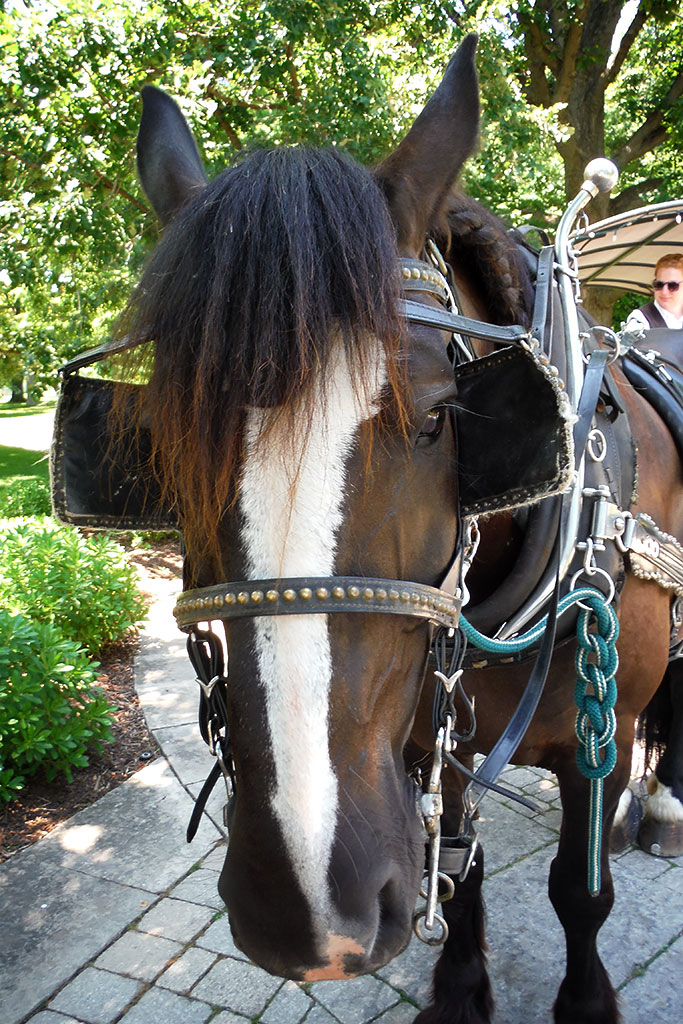 """Jet"" - Horse and Carriage Ride at Niagara Parks' Botanical Gardens"