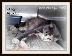 9/11/11 Cindy the Cat is a Love Bug and Good with Dogs. She needs a home.