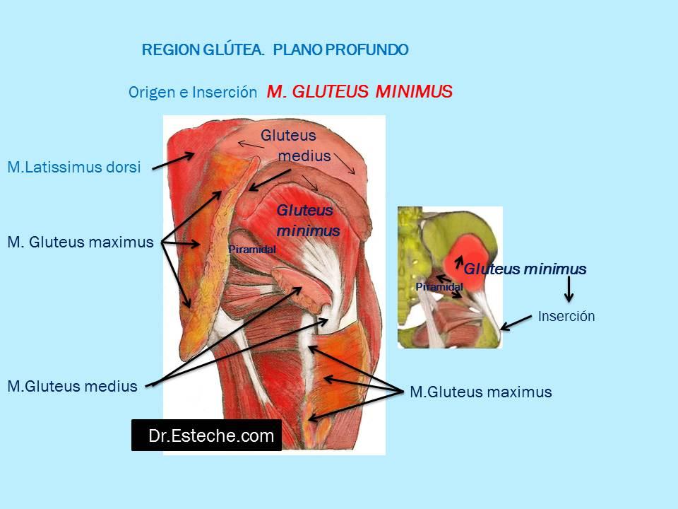 Asombroso Anatomía De La Zona De Los Glúteos Bosquejo - Anatomía de ...